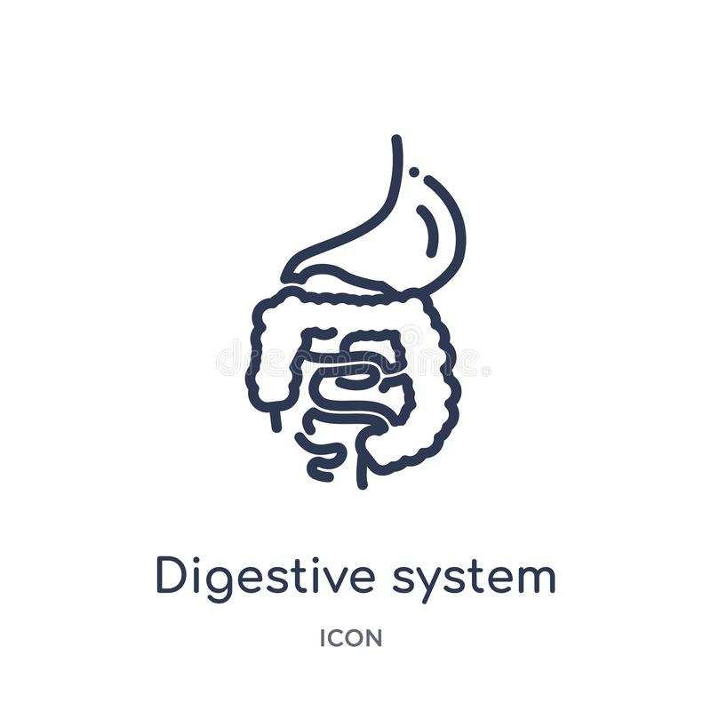Linear digestive system icon from Human body parts outline collection. Thin line digestive system icon isolated on white stock illustration