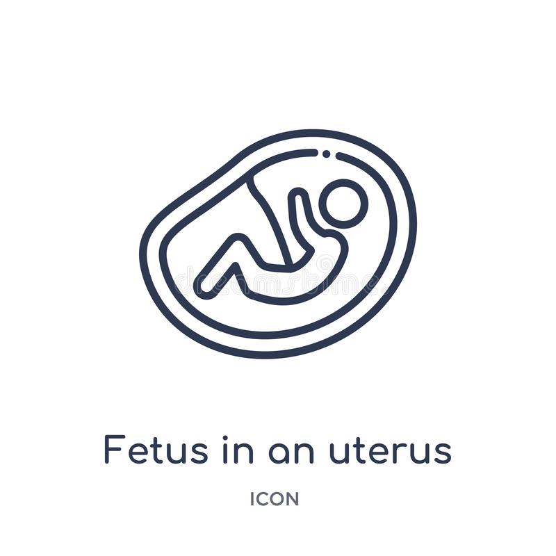Linear fetus in an uterus icon from Human body parts outline collection. Thin line fetus in an uterus icon isolated on white vector illustration