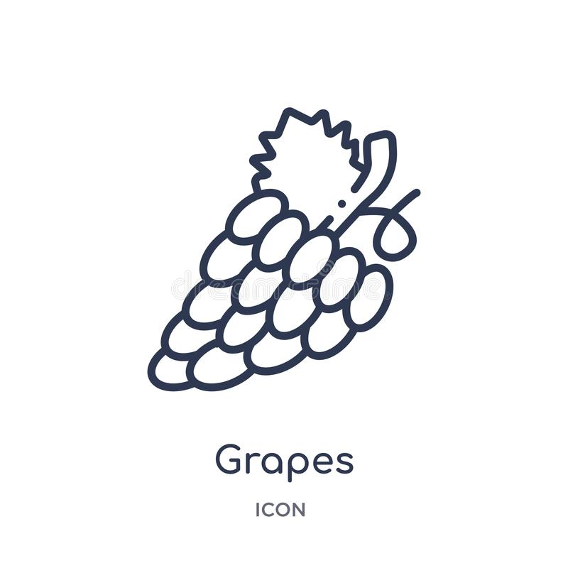 Linear grapes icon from Fruits outline collection. Thin line grapes icon isolated on white background. grapes trendy illustration stock illustration