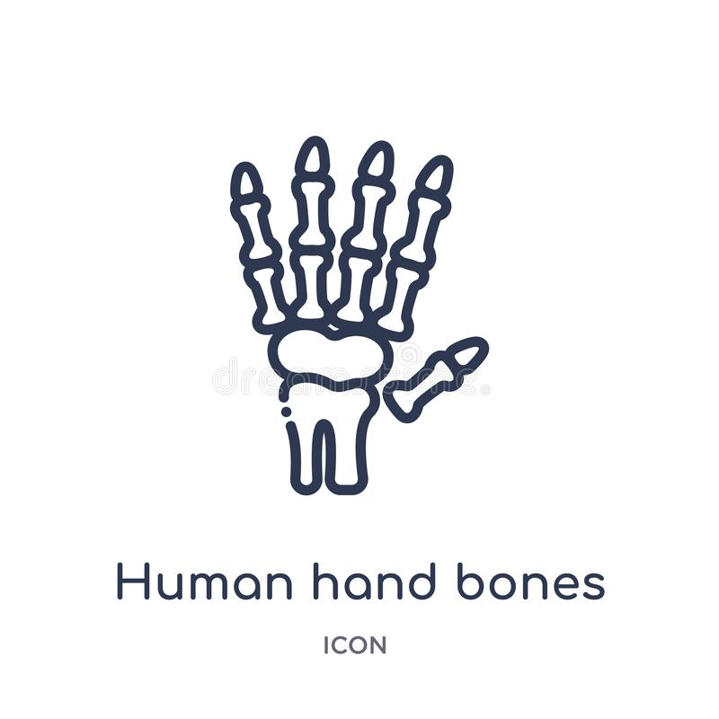Linear human hand bones icon from Human body parts outline collection. Thin line human hand bones icon isolated on white royalty free illustration