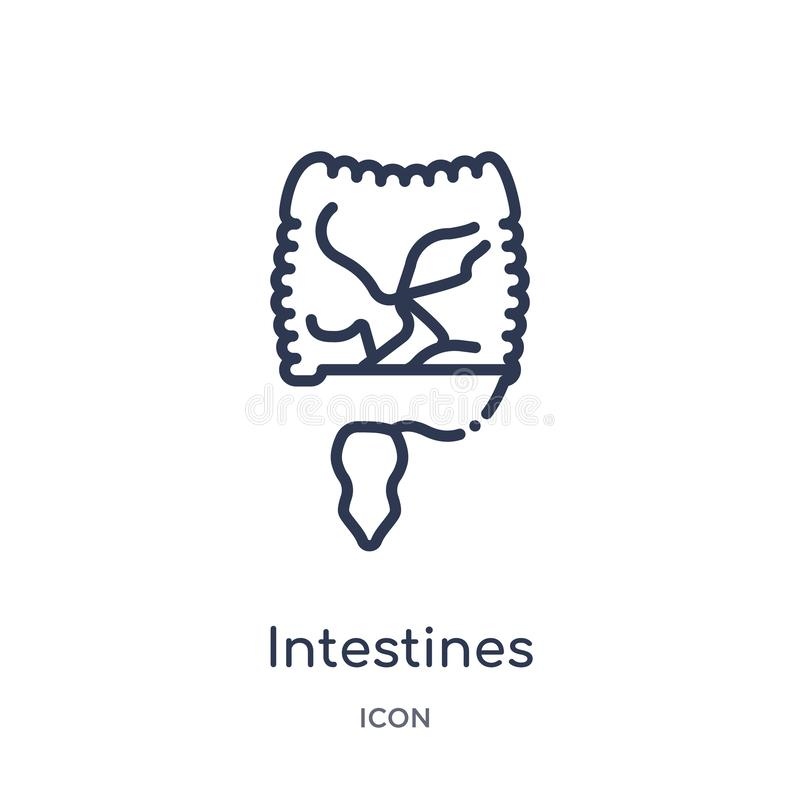 Linear intestines icon from Medical outline collection. Thin line intestines icon isolated on white background. intestines trendy stock illustration