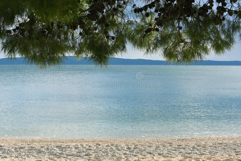 Linear landscape. Pine branches, beautiful sea water and the beach. Place for text. Natural background stock image
