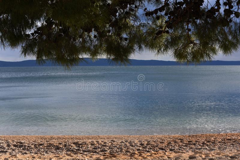 Linear landscape. Pine branches, beautiful sea water and the beach. Place for text. Natural background royalty free stock photography