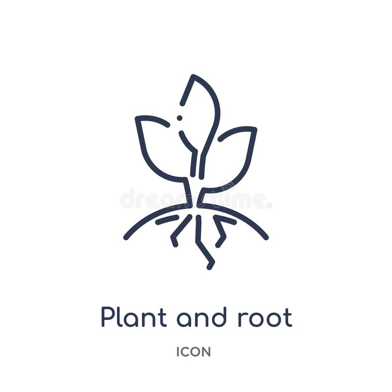 Linear plant and root icon from Ecology outline collection. Thin line plant and root vector isolated on white background. plant stock illustration