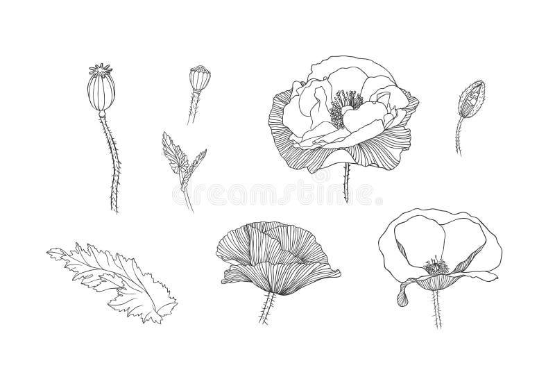 Linear poppy flowers stock vector illustration of ornate 60283883 download linear poppy flowers stock vector illustration of ornate 60283883 mightylinksfo