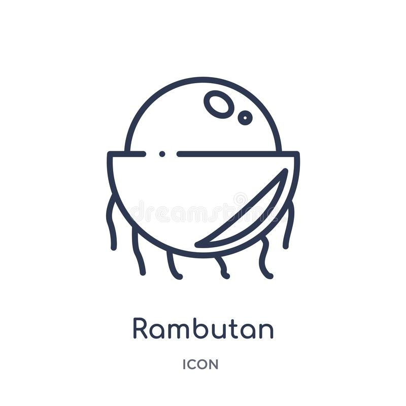 Linear rambutan icon from Fruits outline collection. Thin line rambutan icon isolated on white background. rambutan trendy stock illustration