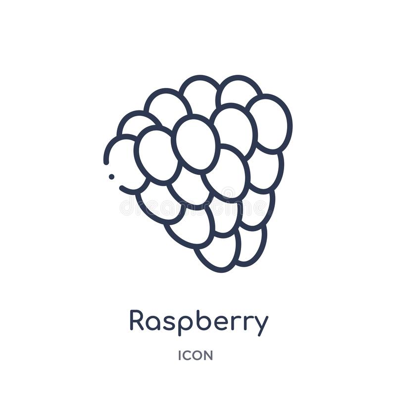 Linear raspberry icon from Fruits outline collection. Thin line raspberry icon isolated on white background. raspberry trendy royalty free illustration
