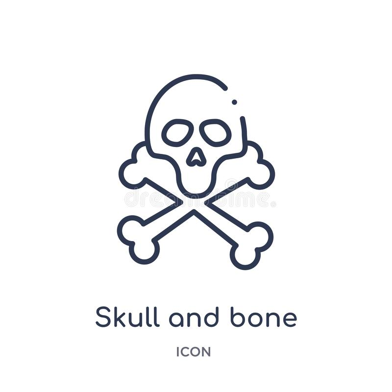 Linear skull and bone icon from Medical outline collection. Thin line skull and bone icon isolated on white background. skull and vector illustration