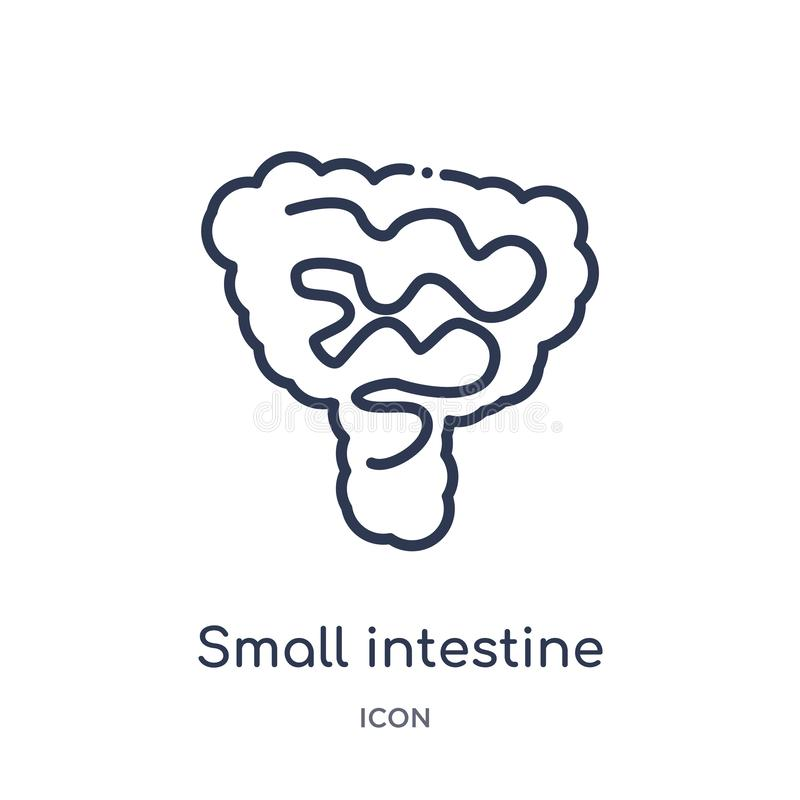 Linear small intestine icon from Human body parts outline collection. Thin line small intestine icon isolated on white background royalty free illustration