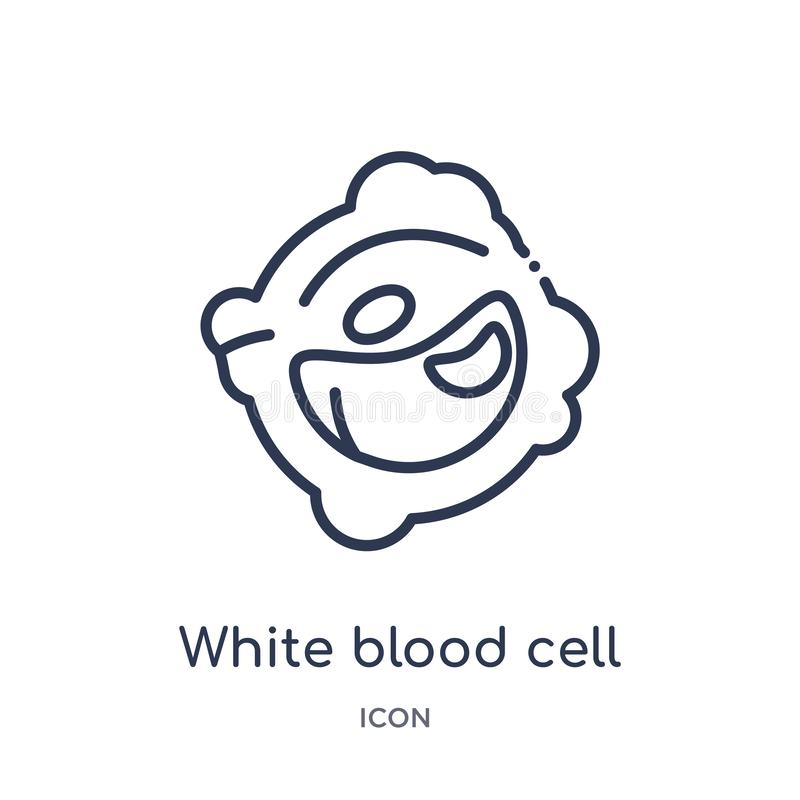 Linear white blood cell icon from Human body parts outline collection. Thin line white blood cell icon isolated on white vector illustration