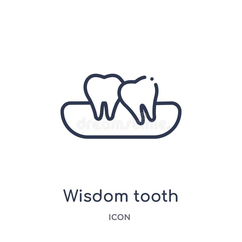 Linear wisdom tooth icon from Dentist outline collection. Thin line wisdom tooth icon isolated on white background. wisdom tooth vector illustration