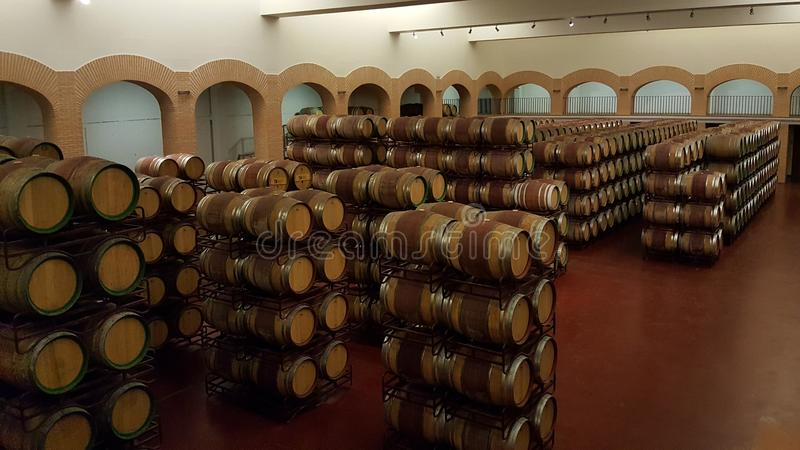 lineare dei barilotti di vino in cantina impilata dell'altezza fotografia stock libera da diritti