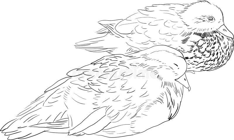Lineare Ente der Zeichnung zwei stock abbildung