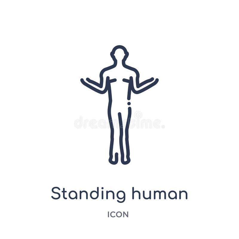 Lineare stehende Ikone des menschlichen Körpers von der menschlichen Körperteilentwurfssammlung Dünne Linie Ikone des menschliche lizenzfreie abbildung