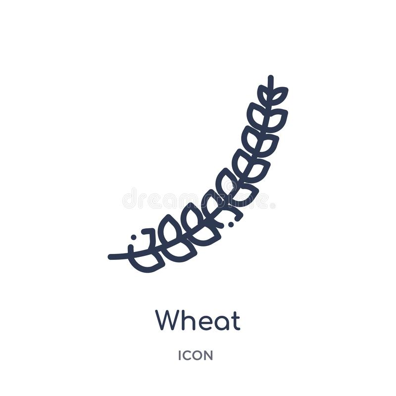 Lineare Weizenikone von der Küchenentwurfssammlung Dünne Linie Weizenikone lokalisiert auf weißem Hintergrund modische Illustrati vektor abbildung