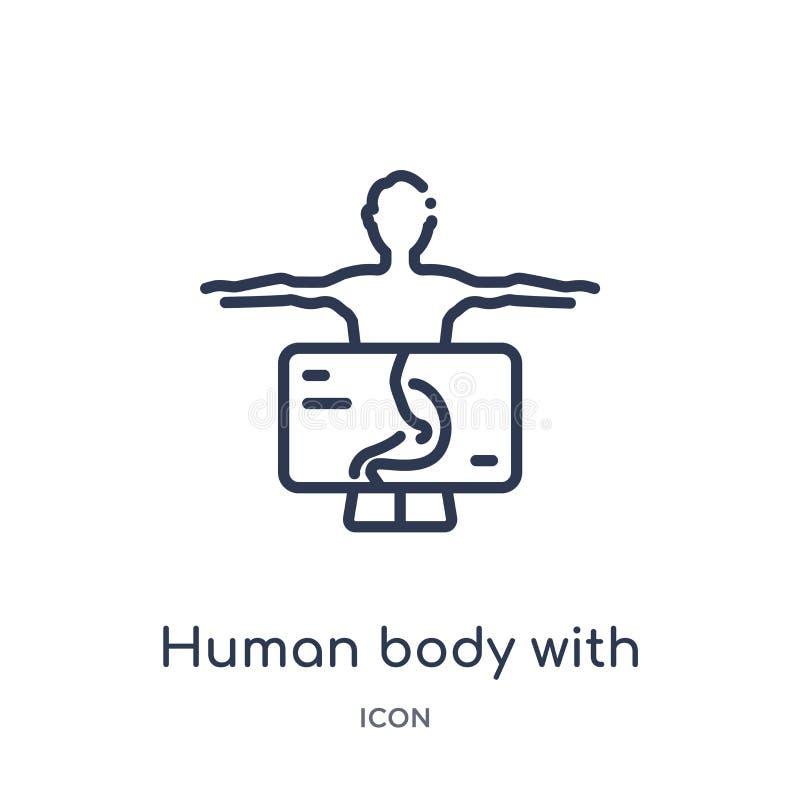 Linearer menschlicher Körper mit der x-Strahlnplatte, die auf Magenikone von der menschlichen Körperteilentwurfssammlung sich kon stock abbildung