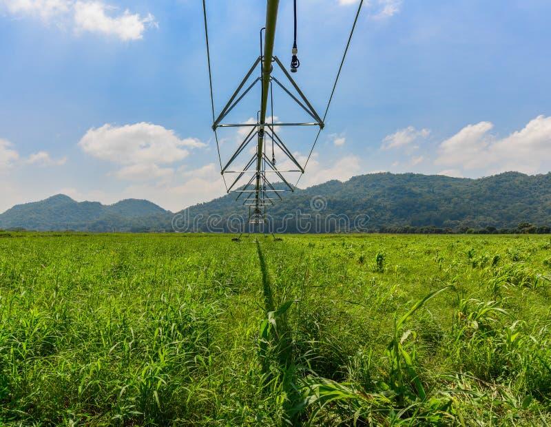 Lineares Bewässerungssystem stockfotos