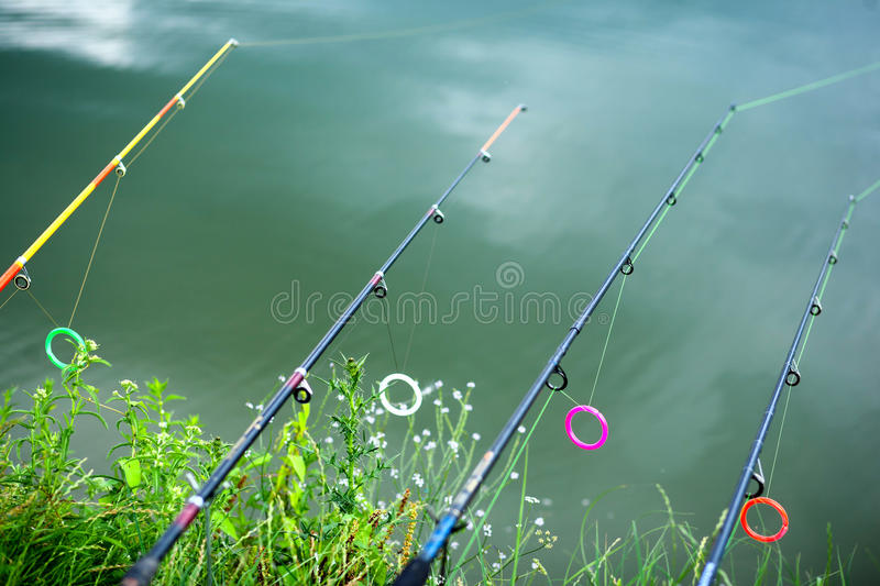 Lined up rods. Waiting for the byte. Freshwater lake stationery fishing royalty free stock photography