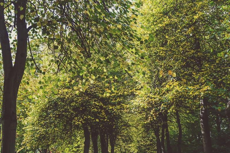 Lined up tree gallery with tall and thick vegetation royalty free stock image