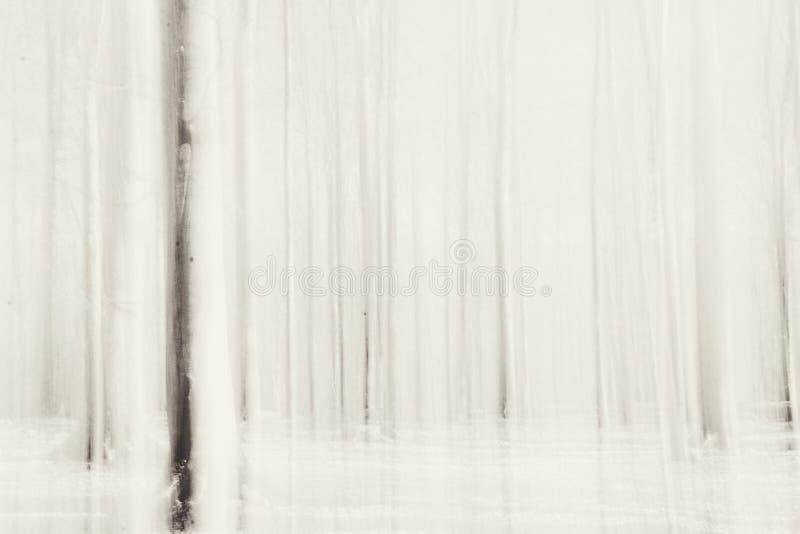 Linee dagli alberi forestali come elementi di un codice a barre fotografia stock
