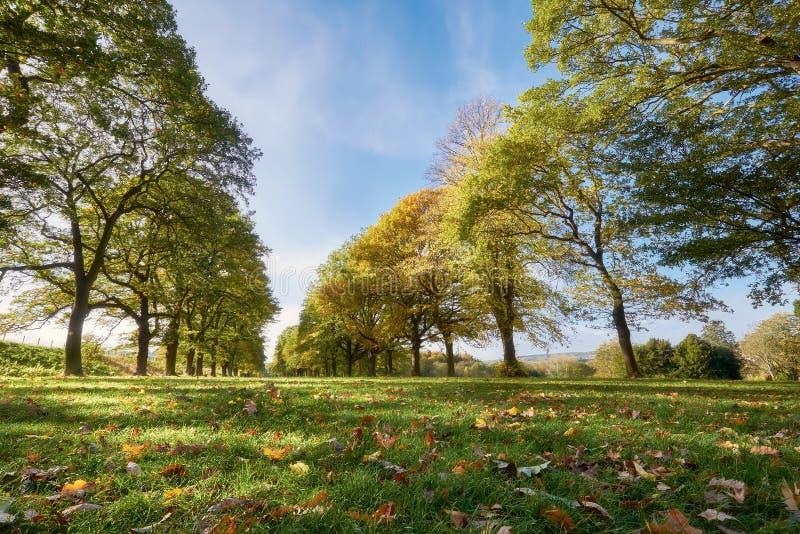 Linee di alberi nella campagna inglese fotografia stock - Soleggiato in inglese ...