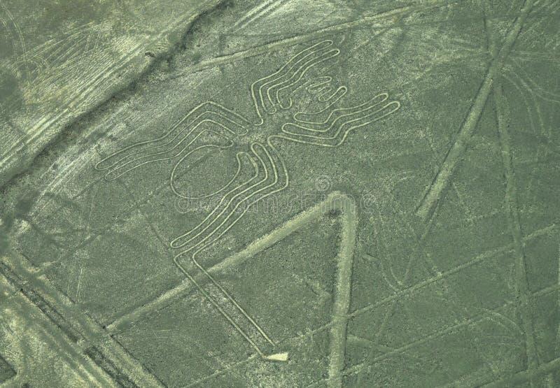 Linee di Nazca: Il ragno fotografia stock