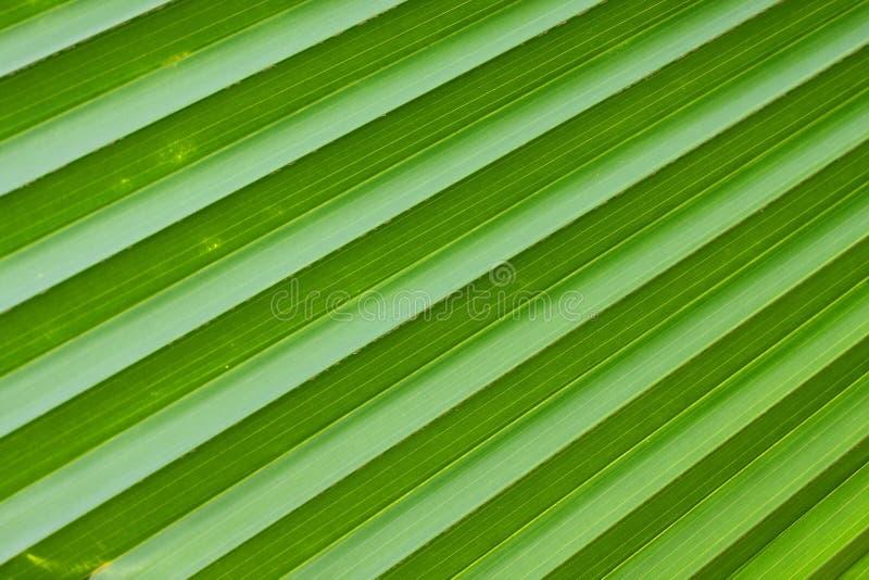 Linee diagonali di foglia di palma verde immagine stock libera da diritti
