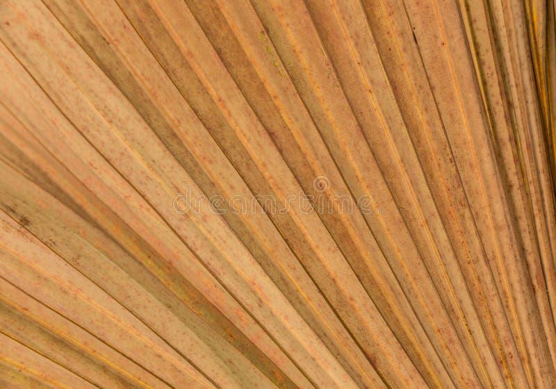 Linee e strutture asciutte delle foglie di palma immagini stock