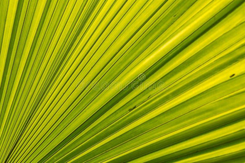 Linee e strutture verdi delle foglie di palma fotografia stock libera da diritti