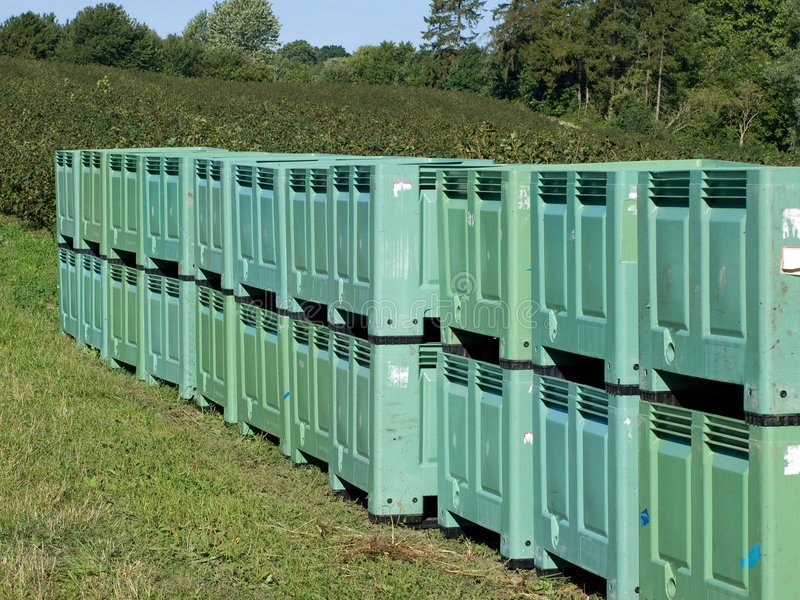 Lines of fruit crates in the filed. Lines of fruit crates in blackberries filed during harvest season royalty free stock photos