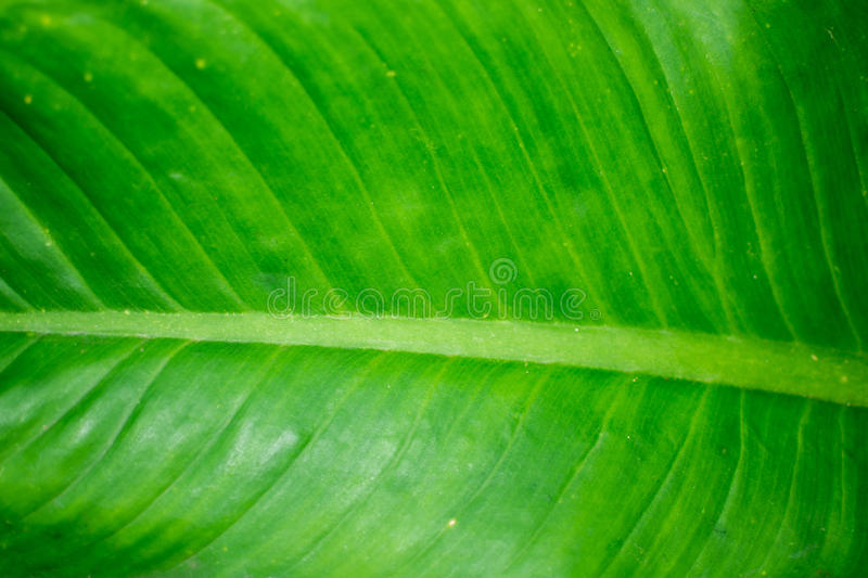 A lines on green leaf background. royalty free stock photos