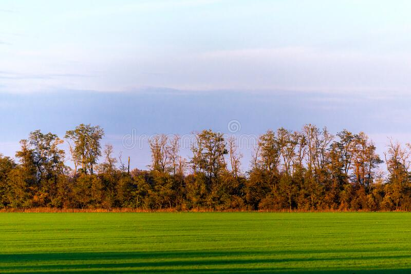 Lines of a mowed, green, grass field are shown, ending at a forest tree line stock image