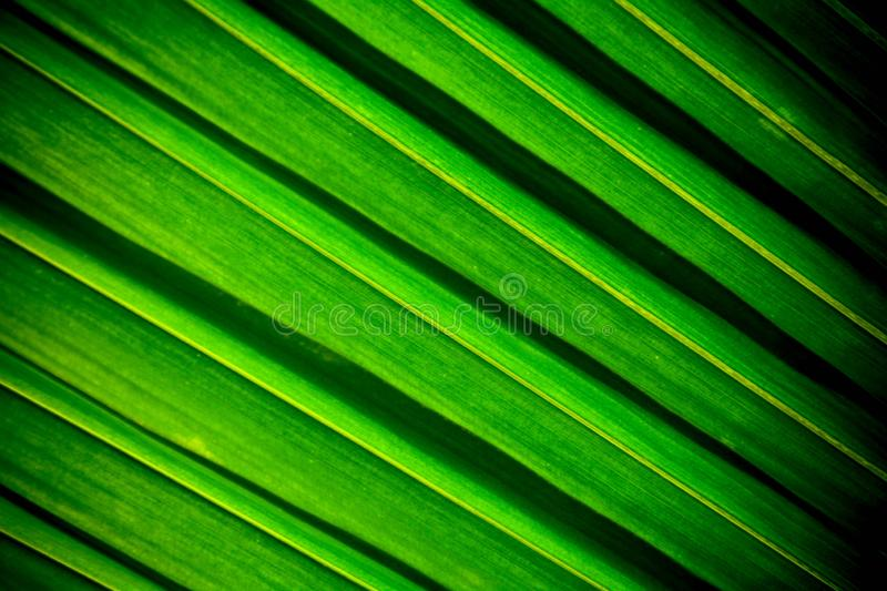 Lines and textures of green palm coconut leaves stock photos