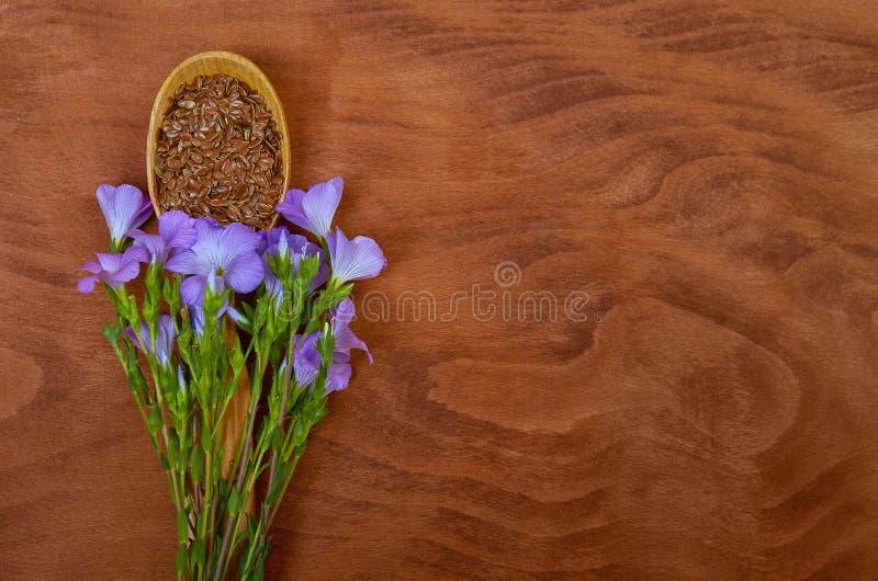 Linfrö i tappningsked med linumväxter och lin blommar på royaltyfri bild