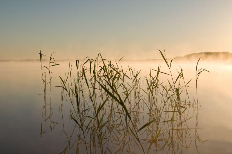 Lingüeta no lago imagem de stock