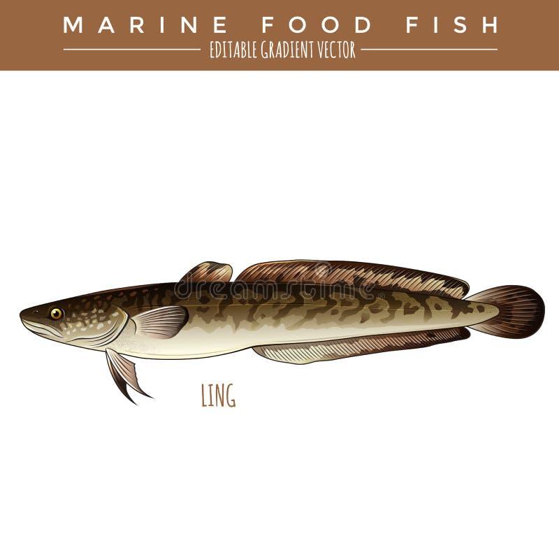 Ling. Marine Food Fish. Ling illustration. Marine food fish, editable gradient vector royalty free illustration
