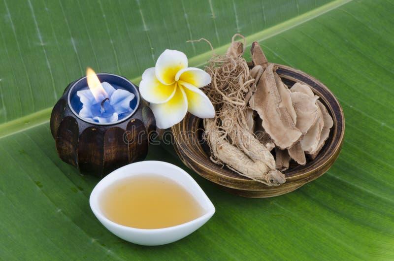 Ling Zhi Mushroom, Lingzhi (cársico do lucidum de Ganoderma (quadro)), raiz do ginsém e mel imagem de stock royalty free