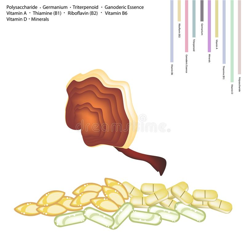 Ling Zhi Mushroom with Vitamin A, B and D. Healthcare Concept, Ganoderma Lucidum and Ling Zhi Mushroom with Polysaccharide, Germanium, Triterpenoid, Ganoderic vector illustration