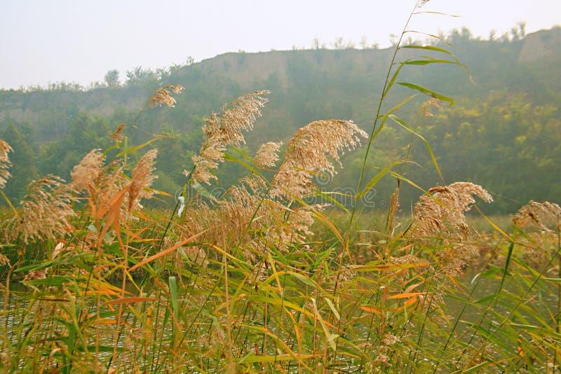 Lingbaomoerasland stock foto