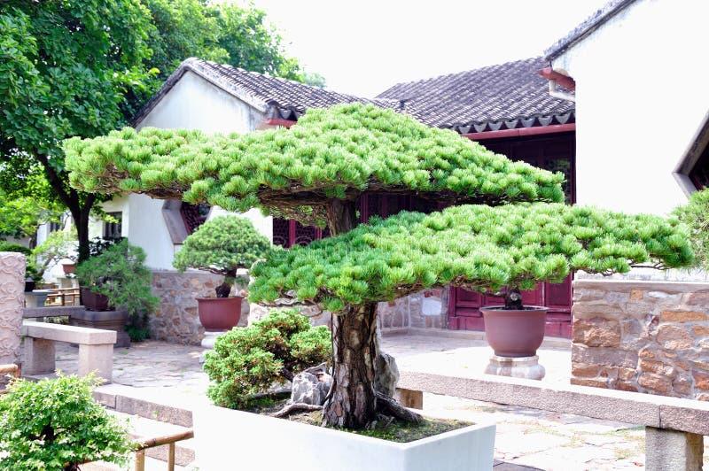 Lingering Garden bonsai stock photography