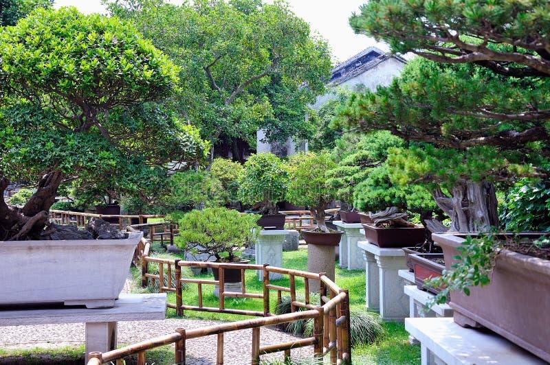 Lingering Garden bonsai garden royalty free stock photography