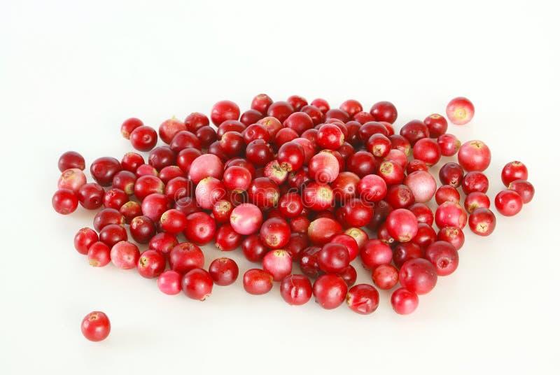 Lingonberries fotografia stock