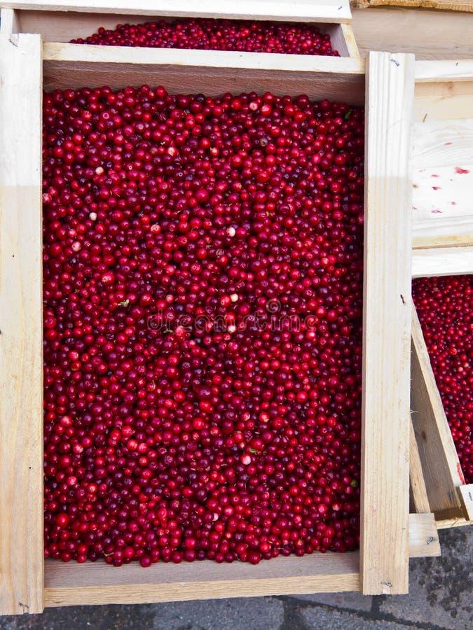 Lingonberry fotos de stock