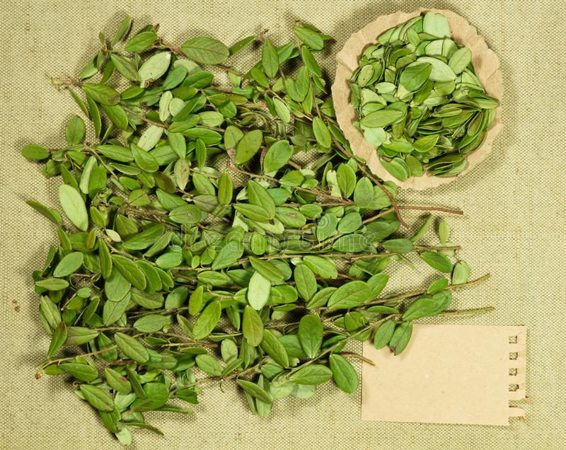 Lingonberry, airela Erva seca para o uso na medicina alternativa, phytotherapy foto de stock royalty free