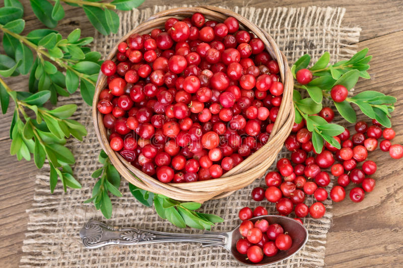 Lingonberry basket top view. Red Lingonberry in a basket, top view royalty free stock photo