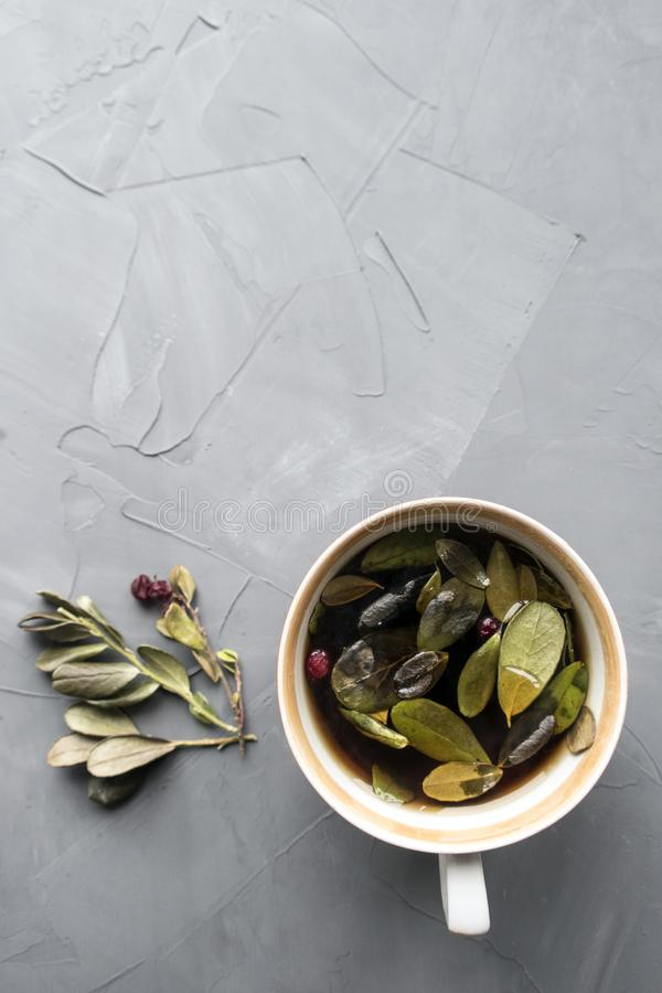 Lingonberry tea. And leaves close-up on a gray background and copy space royalty free stock image