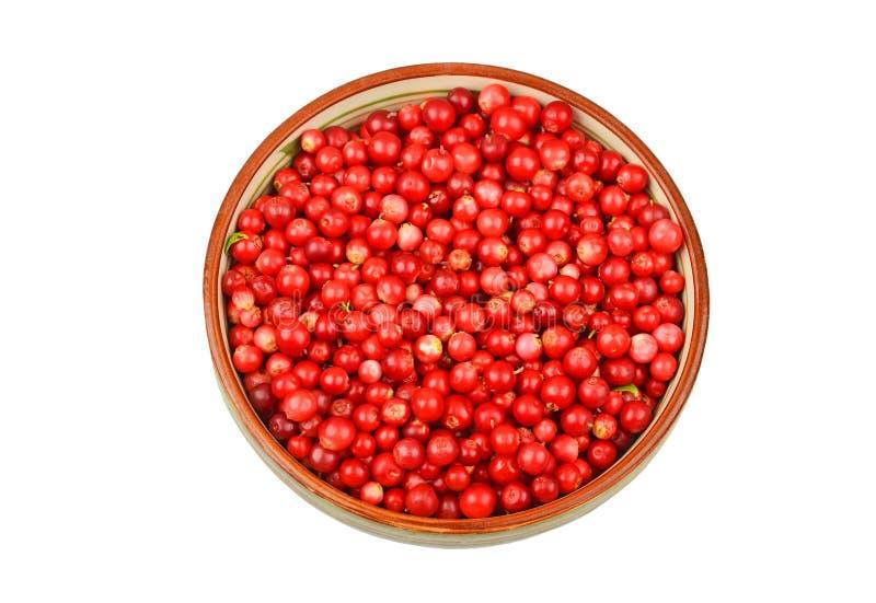 Lingonberry & x28; Vitis-idaea& x29 del vaccinio; immagini stock