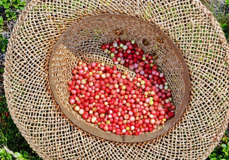Lingonberryvruchten royalty-vrije stock afbeelding