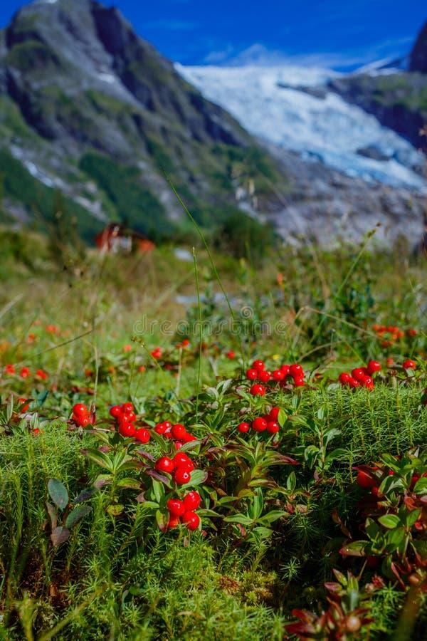 Lingonnärbild med glaciären och grön bergbakgrund Norsk liggande norway arkivbild