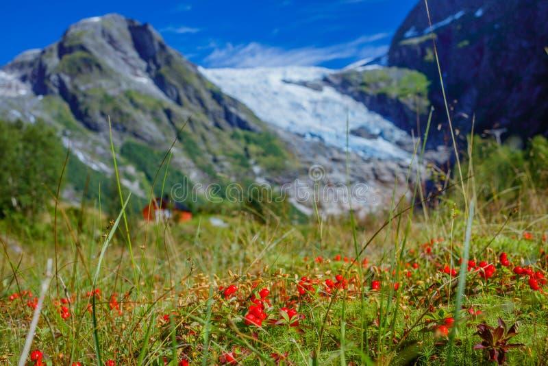 Lingonn?rbild med glaci?ren och gr?n bergbakgrund Norsk liggande norway royaltyfria bilder